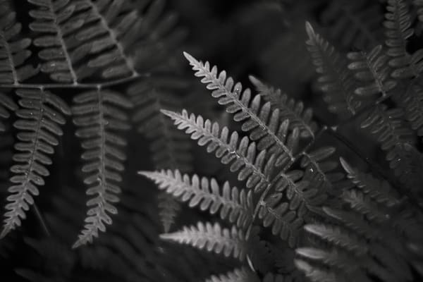 Ferns No. 2, Whidbey Island, Washington, 2014