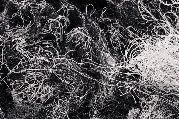 Alpine Lichen No. 4, Washington, 2014
