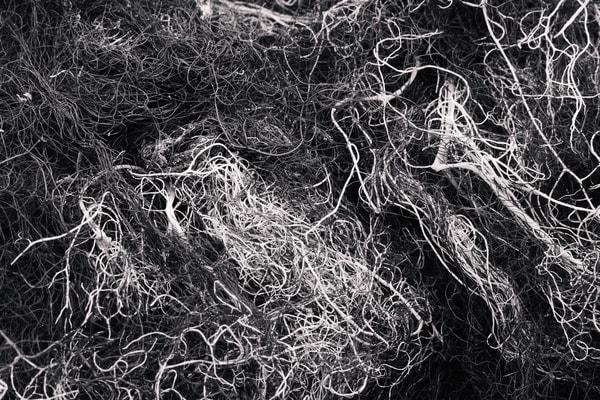 Alpine Lichen No. 5, Washington, 2014