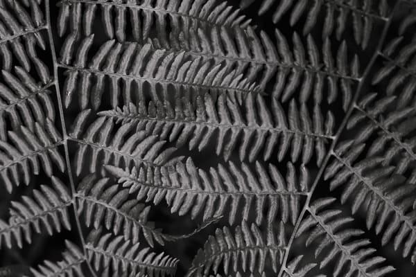 Ferns No. 1, Whidbey Island, Washington, 2014