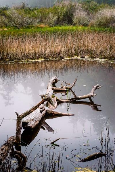 Wetlands, Deception Pass State Park, Washington, 2016