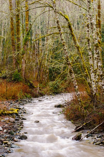Winter Along Loretta Creek, Skagit County, Washington, 2017