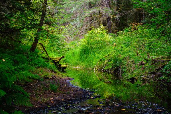 Woods Creek, Randle, Washington, 2016
