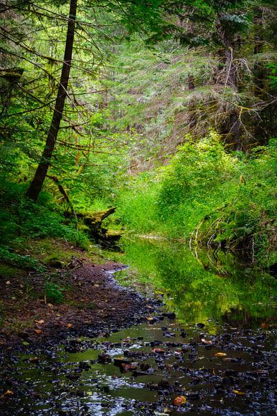 Woods Creek, Lewis County, Washington, 2016