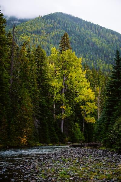 Autumn Colors Along the Bumping River, Washington, 2016