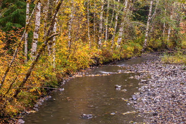 Autumn Colors, Deer Creek, Washington, 2015