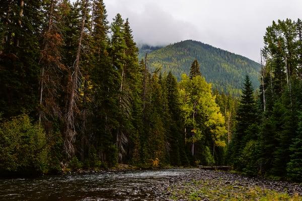 Autumn Forest, Bumping River, Washington, 2016