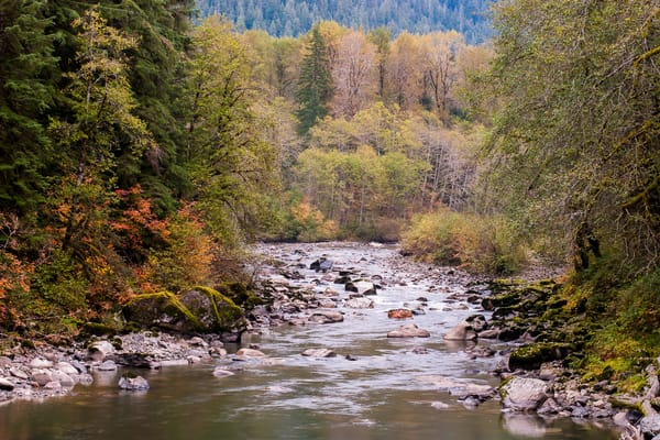 Autumn Colors Along the South Fork Stillaguamish River, Washington, 2015