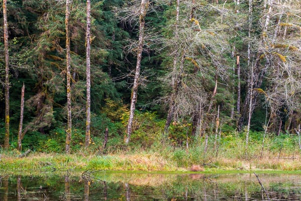 Autumn Forest, Gold Basin Mill Pond, Washington, 2015