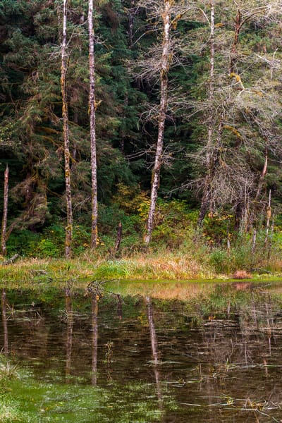 Autumn Reflections, Gold Basin Mill Pond, Washington, 2015