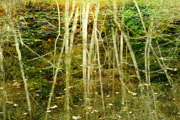 Autumn Reflections, San Juan Island, Washington, 2013