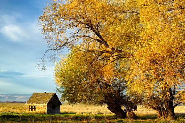 Autumn Colors, Lyons Road, Kittitas County, Washington, 2013