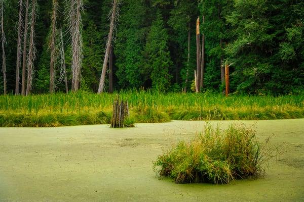Beaver Pond, Lewis County, Washington, 2016