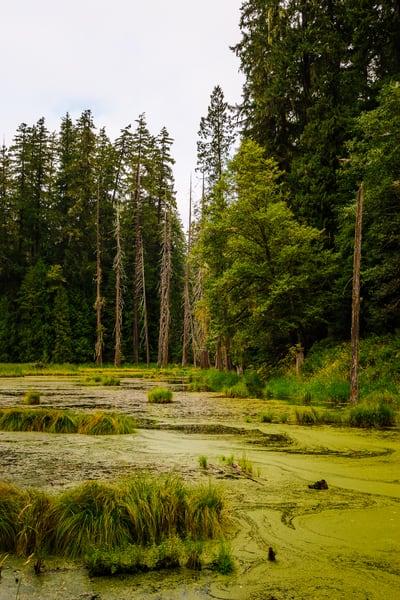 Beaver Pond, Randle, Washington, 2016