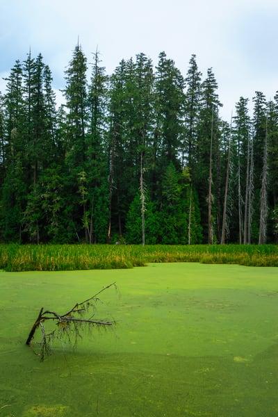 Beaver Pond, Gifford Pinchot National Forest, Washington, 2016