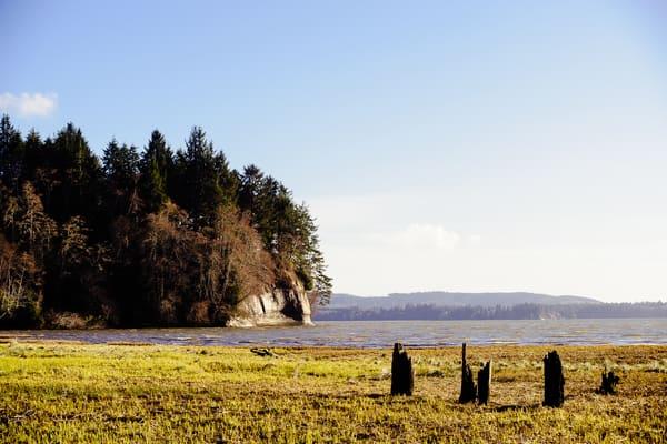 Coastline, Nemah Road, Willapa Bay, Washington, 2017