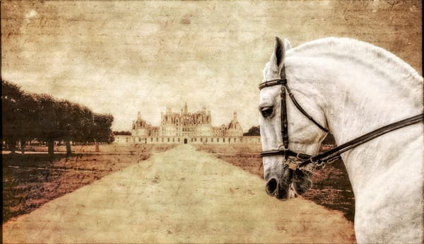 A photo-illustration of a Lipizzaner stallion at the chateau Chambord in France