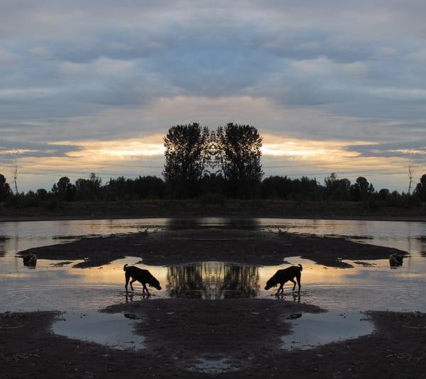 Mirror 222 - Black Dog At Sunset