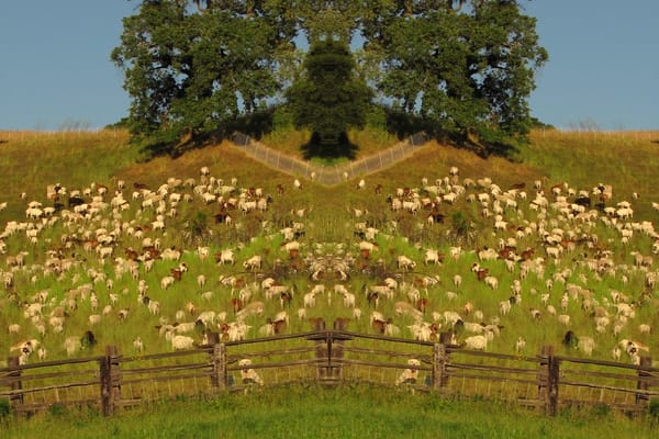 Mirror 254 Watching Over The Herd Art | Loree Harrell Art