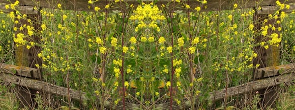 Mirror 249_Yellow On Weathered