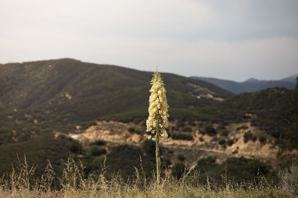 Yucca Above The Ridge 2 Photography Art | Sydney Croasmun Photography