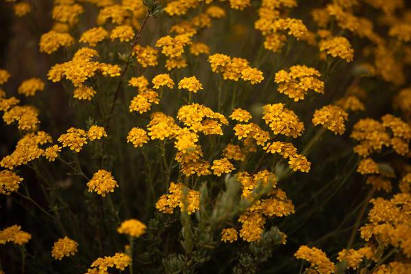 Yellow Flowers Photography Art | Sydney Croasmun Photography