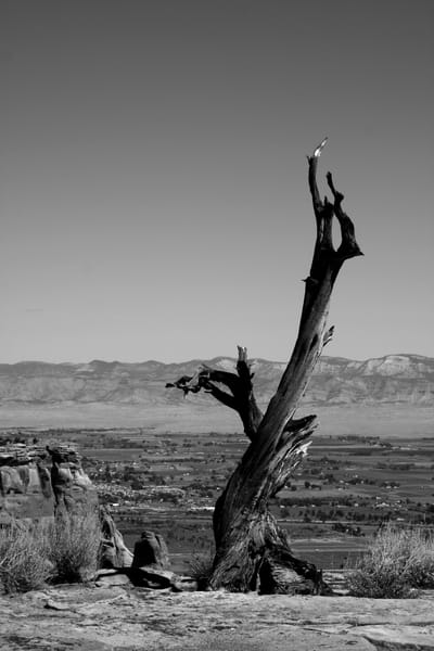 Lonely Tree (B&W Metal Limited Edition) Photography Art | Creighton Images