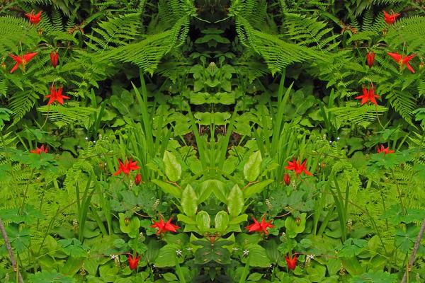 Mirror 756_Lion Enrobed