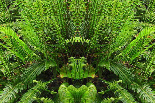Mirror 752_Warrior In The Green
