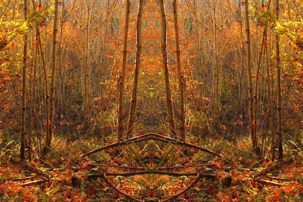 Mirror 1114_The Forest Of Golden