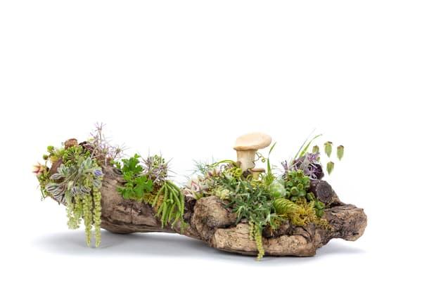 Mystic Fungi