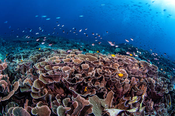 Cabbage Patch is an underwater photograph of a coral reef and is available for sale as a fine art photograph.