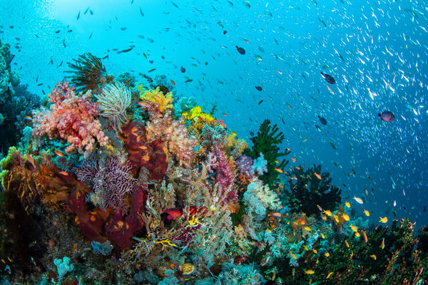 Healthy Coral Reef is a photograph made underwater of a marine landscape and is available as a fine art print for sale.