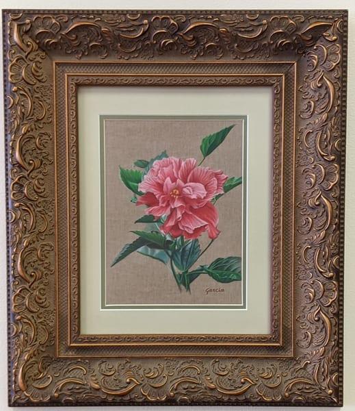 Dan Garcia - flowers - colored pencil - Double Hibiscus