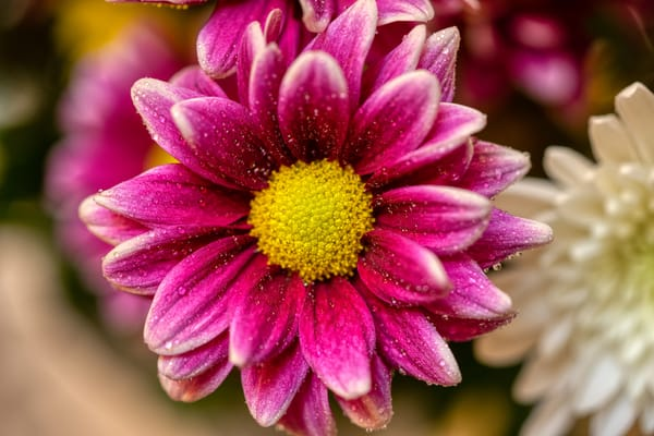 Purple Flower Photography Art | Paul J Godin Photography