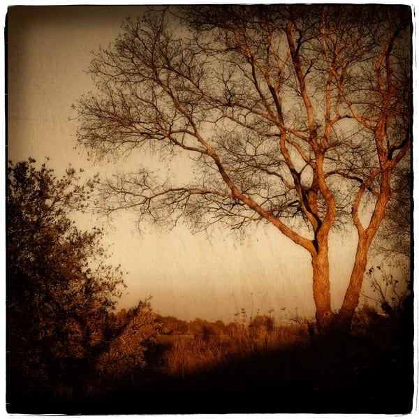 Mulberry Yellow Sunset Photography Art | David Frank Photography