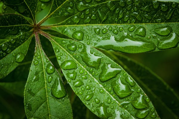 Leaves After Showers Photography Art | Michael Penn Smith - Vision Worker