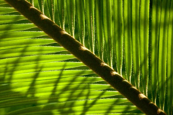 Fern Wall Photography Art | Michael Penn Smith - Vision Worker