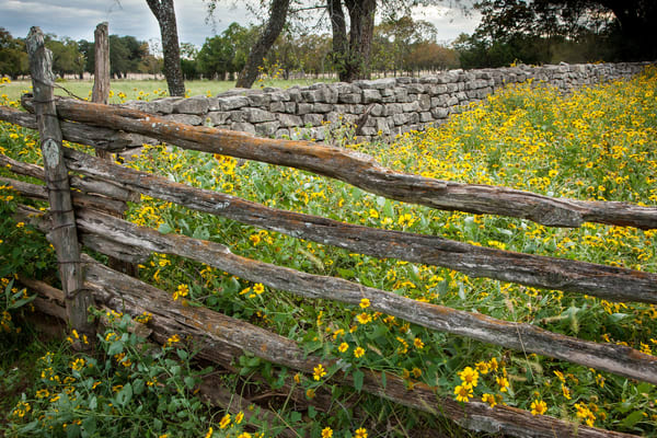 Fences Flowers Photography Art | Michael Penn Smith - Vision Worker