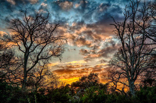 2 Trees At Sunset Photography Art | Michael Penn Smith - Vision Worker
