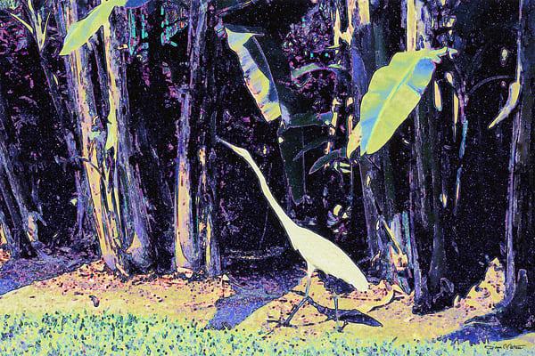 Tropical Forest White Bird Walk - Debra Cortese