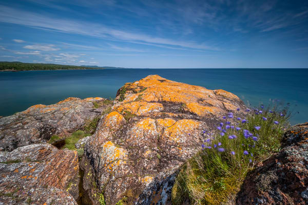 Lichen & Harebells, Red Rock Point, Lake Superior Photography Art | John Gregor Photography