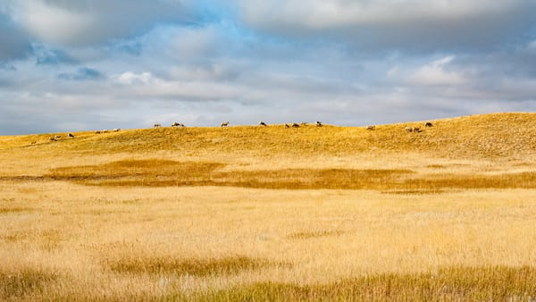 Bighorns On The Horizon Photography Art | Eric Hatch