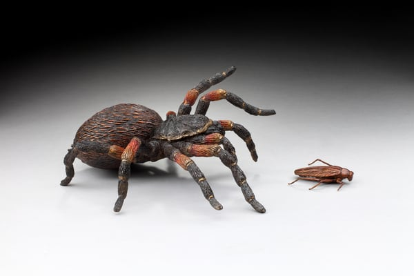 """The Last Tango""   Mexican Red Knee Tarantula And Cockroach Art 