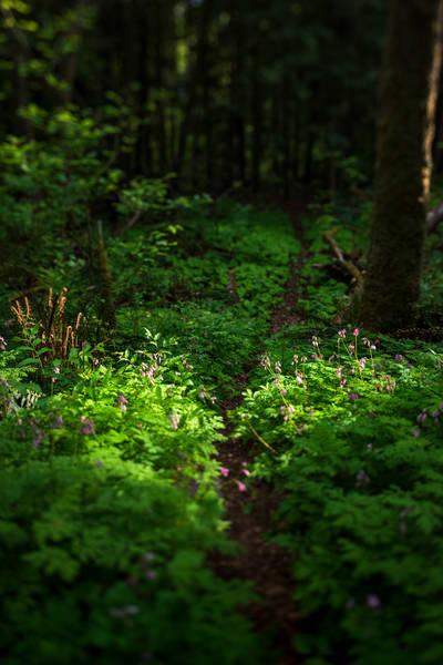 Secret Path Art | James Alfred Friesen