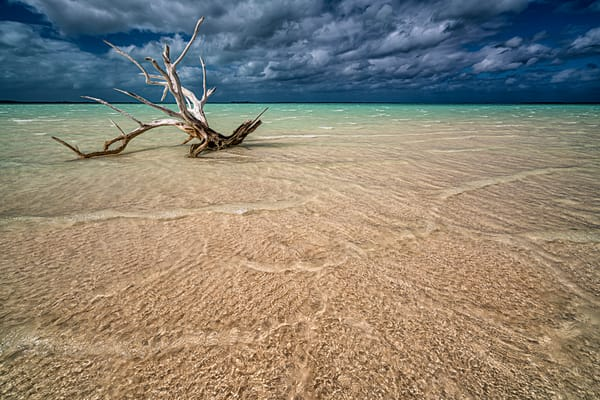 Driftwood Before The Storm Photography Art | Carol Brooks Parker Fine Art Photography