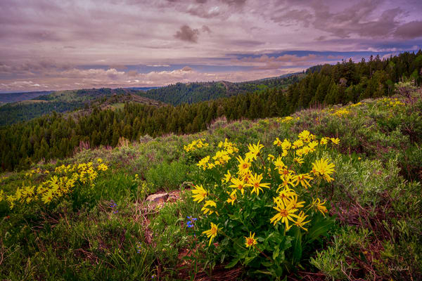 After The Rain   Bear Lake Photography Art | McKendrick Photography