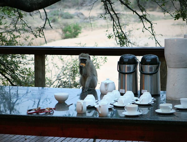 The Monkey Took Your Muffin Art | DocSaundersPhotography
