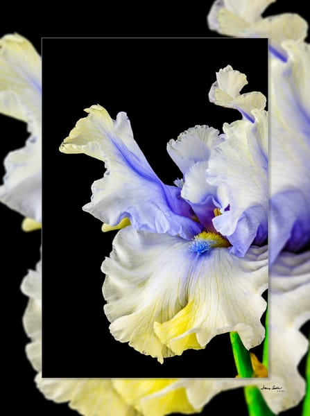Iris Dancing 3 D Photography Art | Whispering Impressions