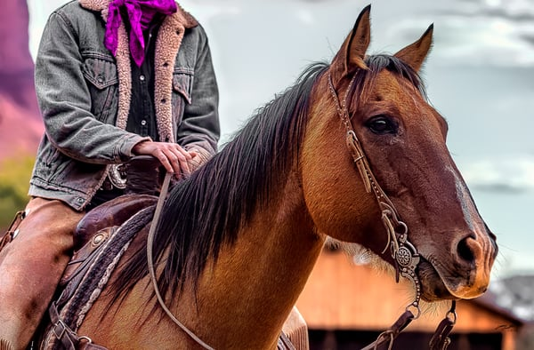 Horse Scarf  Photography Art | Whispering Impressions
